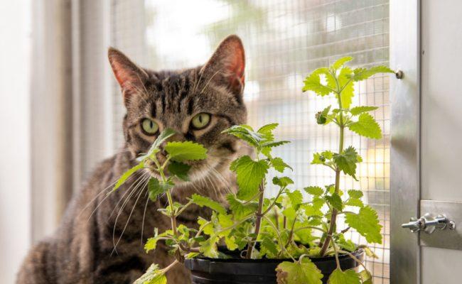 cat sitting near catnip