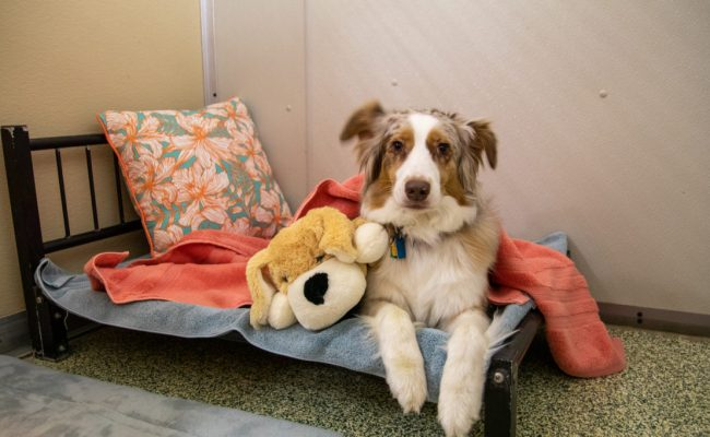 Dog in our pet care services in a private kennel