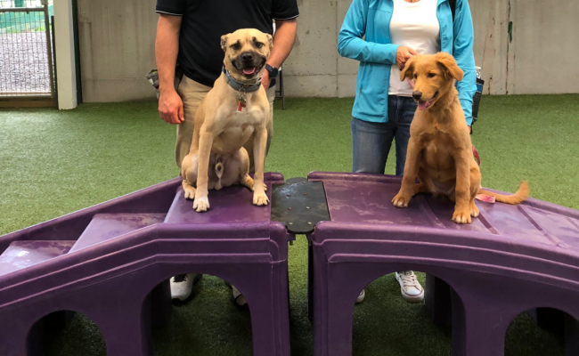 Two dogs trained on stairs
